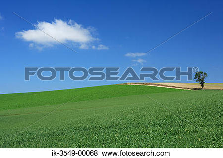 Pictures of Plants field with grassland against blue sky ik.