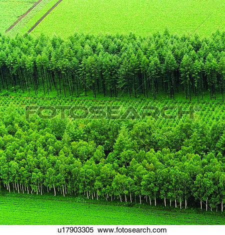 Stock Image of Field, Tree, Trees, Planting, Cultivating.