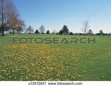 Stock Photography of plant, scenic, tree, flower, grassland.