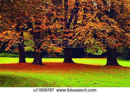 Picture of Relaxing, Forest, Leaf, Grassland, Plant, German.