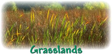 Grasslands Animals.