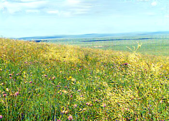 grassland002.jpg.