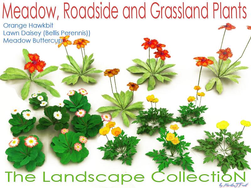 Meadow Roadside and Grassland Plants Software 3D Models martinjfrost.