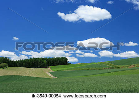 Stock Photo of Grassland with plants growing in a field. ik.