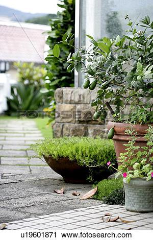 Stock Photography of Pot plants, Trees, Garden, Grassland, Plants.