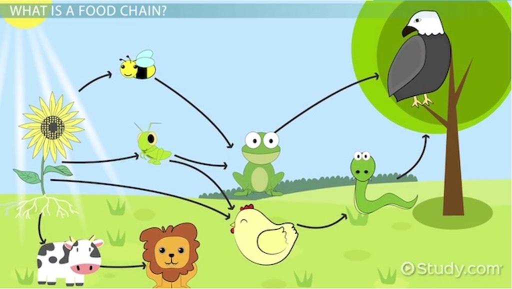 Grassland Food Chain.