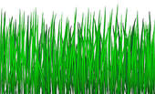 Royalty Free Green Grass Clip Art.