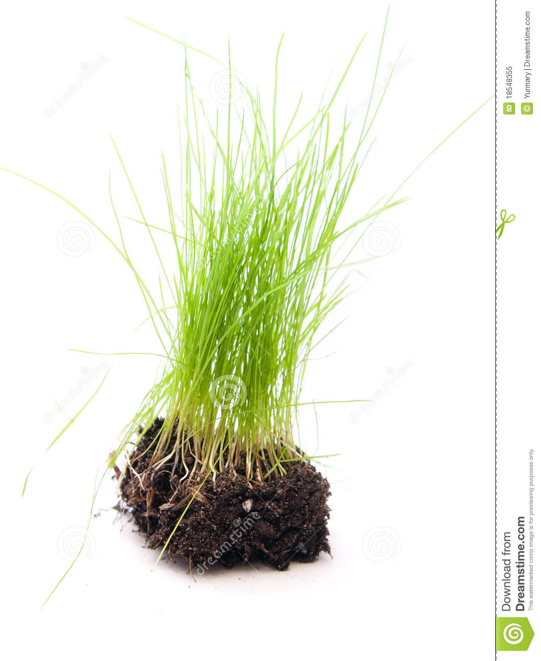 Green Grass With Roots On White Background Royalty Free Stock.