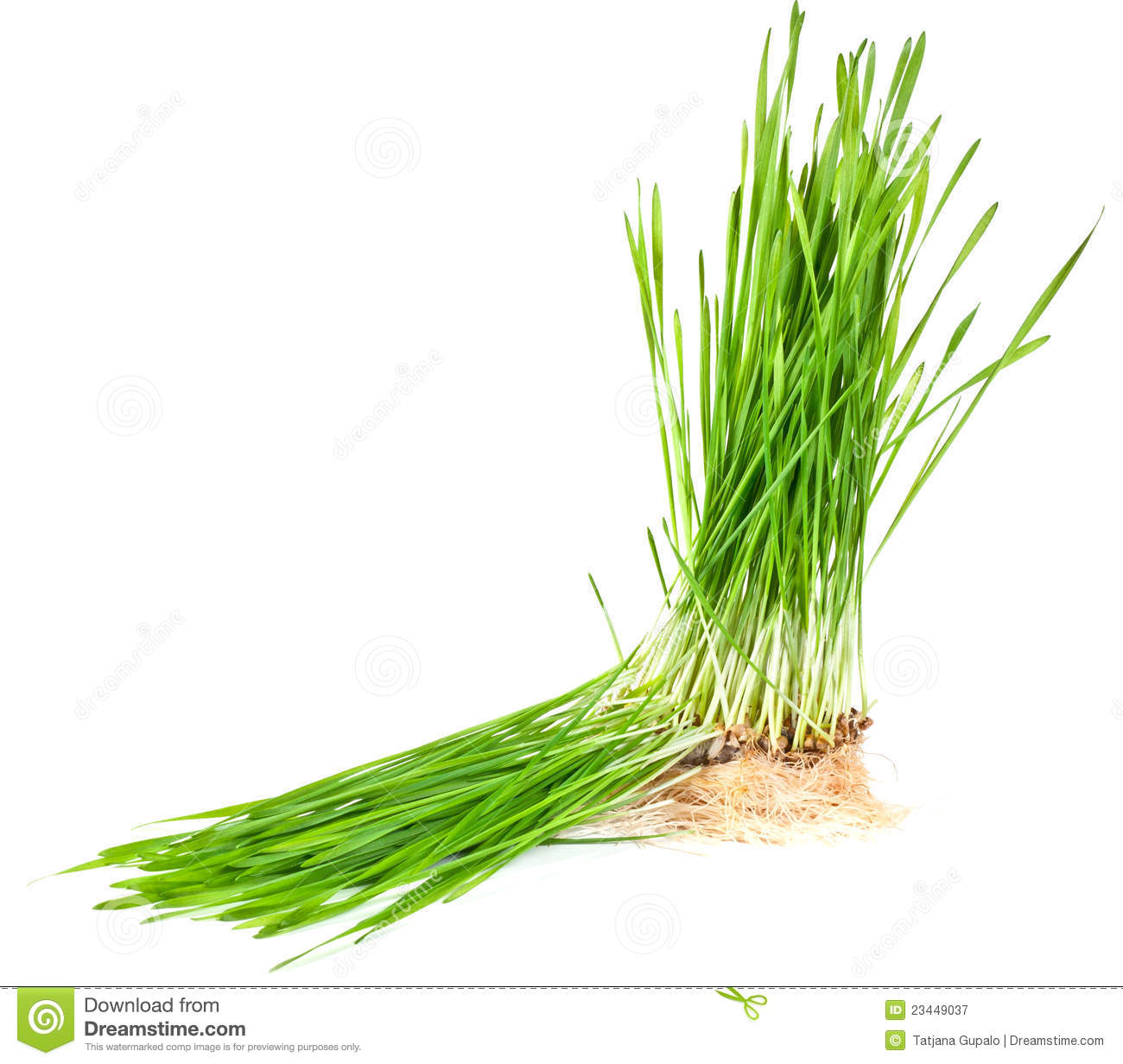 Clipart Grass With Roots.