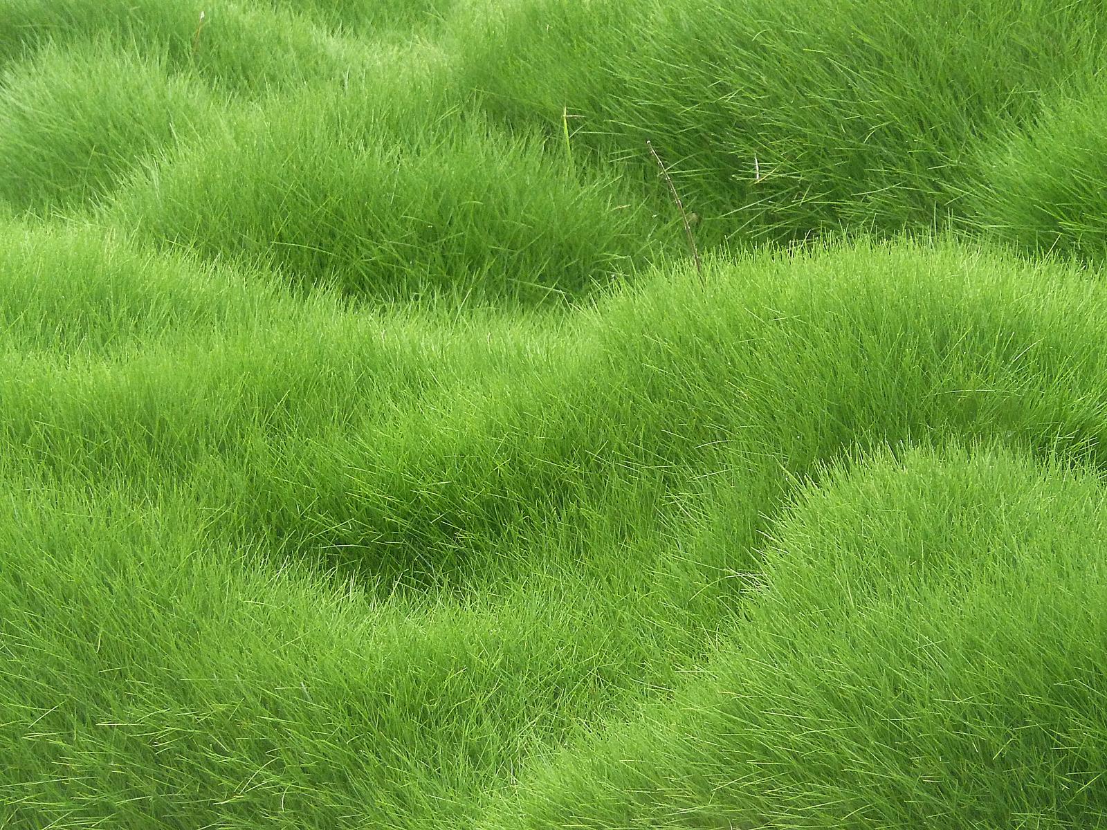 Grassy Background.