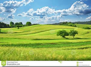 Grassy Field Clipart.