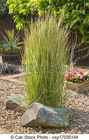 Stock Photo of Ornamental grass in a gravel bed and rockery.