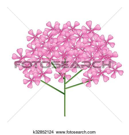 Clipart of Bunch of Red Rose Geranium or Pelargonium Graveolens.