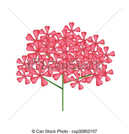 Vector Clipart of Bunch of Red Rose Geranium or Pelargonium.