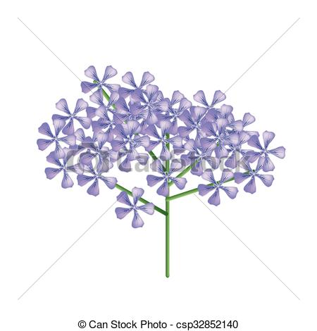 EPS Vector of Bunch of Violet Rose Geranium or Pelargonium.