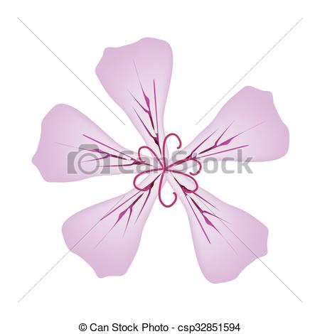EPS Vectors of Rose Geranium Flowers or Pelargonium Graveolens.