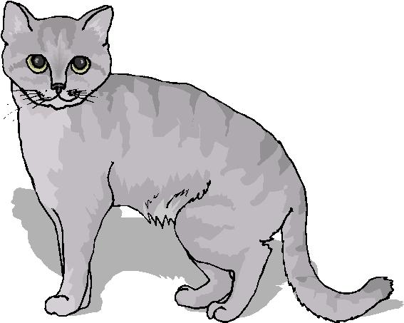 Grey Cat Clipart.