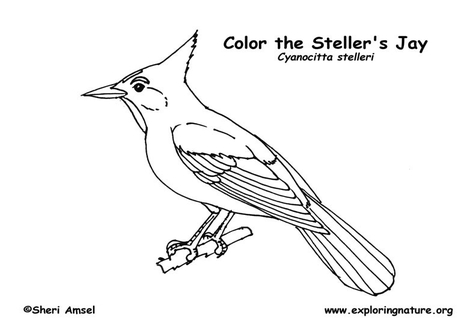 Flying Blue Jay Coloring Pages coloring page, coloring image.