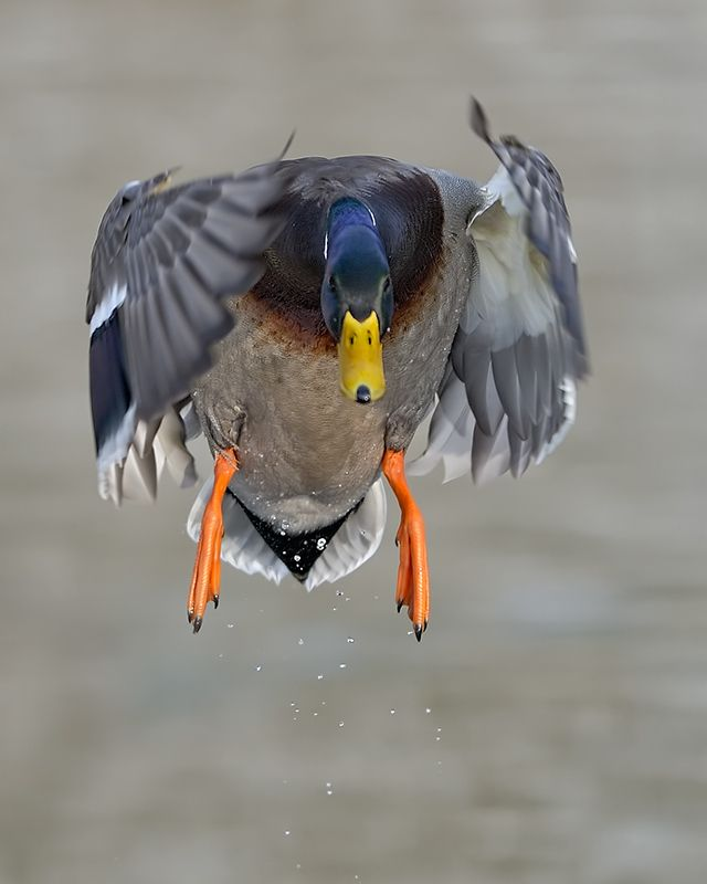 1000+ images about Bird's in Flight!.