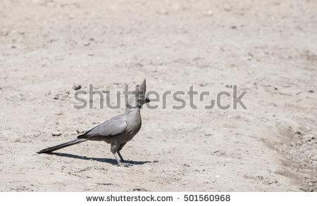 """go Away Bird"""" Stock Photos, Royalty."""