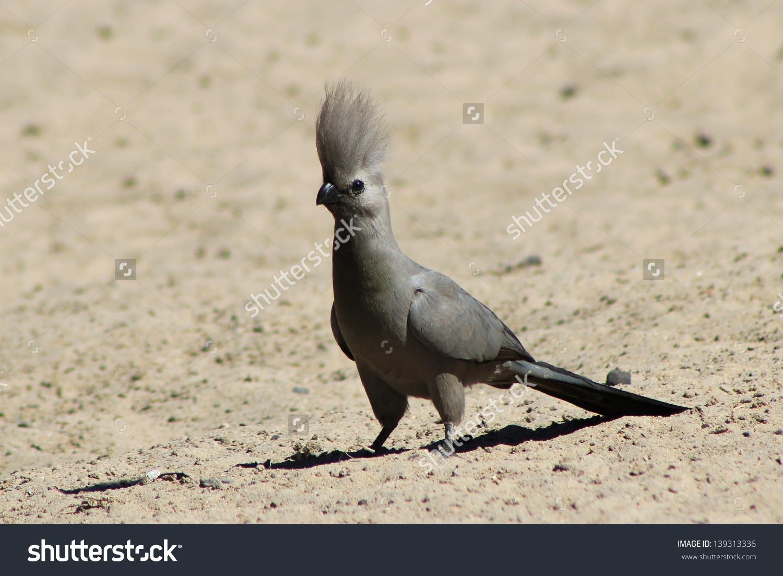 Grey Lourie Wild Birds Africa Grey Stock Photo 139313336.