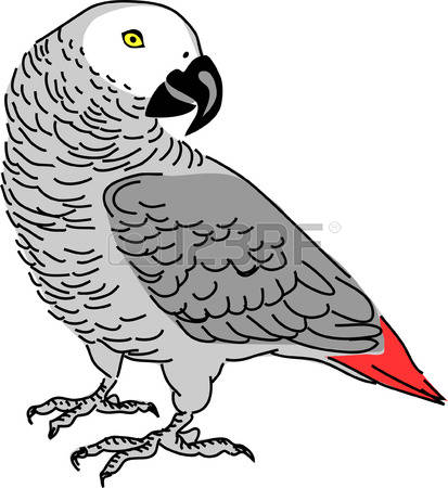 302 Grey Parrot Stock Illustrations, Cliparts And Royalty Free.