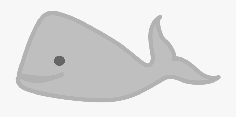 Free Image On Pixabay Whale Sea Animal Ⓒ.