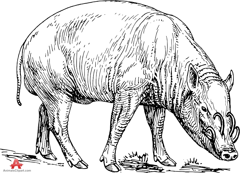 Grazing Pig Drawing Clipart.