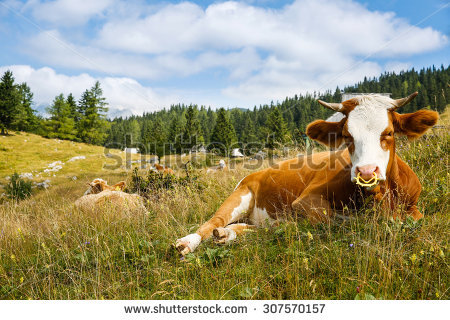 Intensive Farming Stock Photos, Royalty.