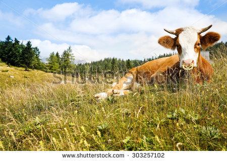 Intensive Farming Stock Photos, Royalty.