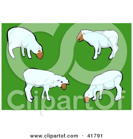 Clipart Illustration of a Group Of White Sheep Grazing In A Green.