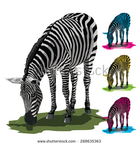 Grazing Zebras Stock Photos, Royalty.