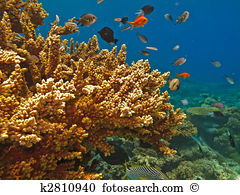 Great barrier reef Stock Photos and Images. 1,527 great barrier.