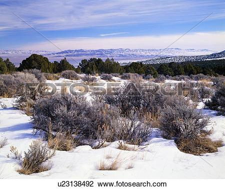 Stock Photo of A high desert winter landscape, Great Basin.