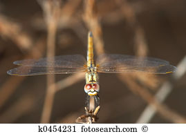 Zygoptera Images and Stock Photos. 499 zygoptera photography and.