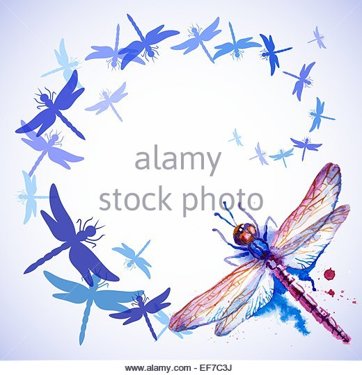Dragonflies Flying Stock Photos & Dragonflies Flying Stock Images.