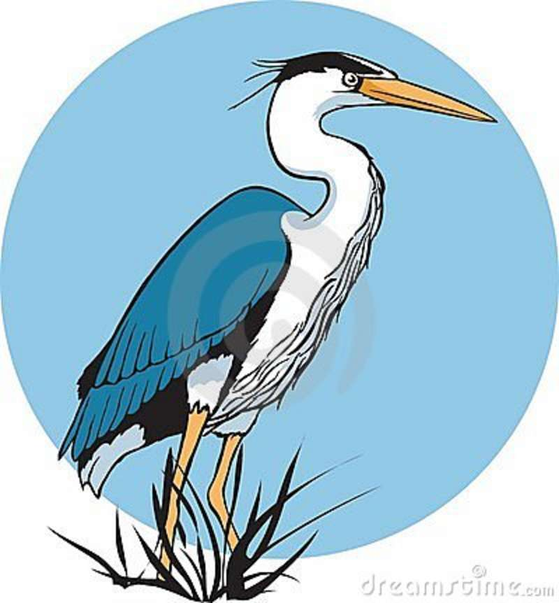 Free clip art great blue heron.