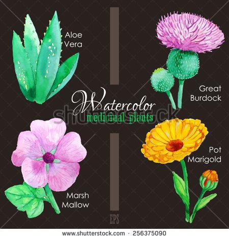 Marsh Mallow Stock Vectors & Vector Clip Art.