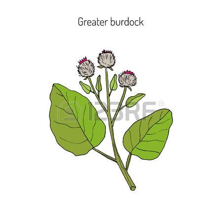 172 Burdock Cliparts, Stock Vector And Royalty Free Burdock.