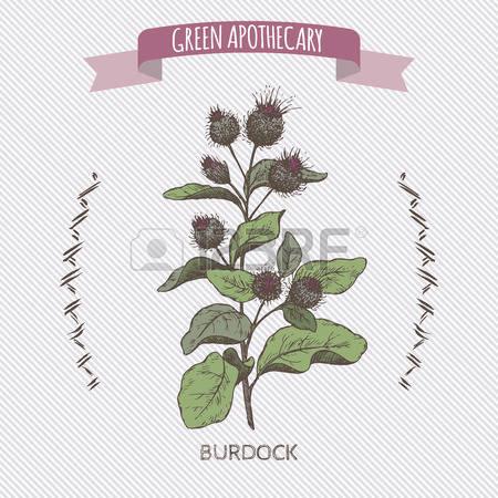 130 Burdock Cliparts, Stock Vector And Royalty Free Burdock.