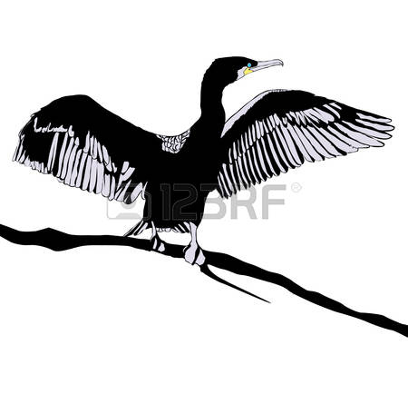 127 Cormorant Stock Vector Illustration And Royalty Free Cormorant.