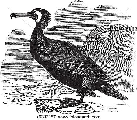 Clip Art of Great Cormorant or Great Black Cormorant or Black.