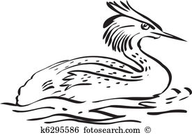 Great crested grebe Clip Art and Illustration. 8 great crested.