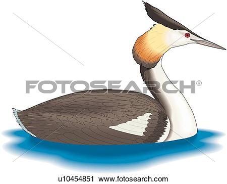 Clipart of Great Crested Grebe u10454851.