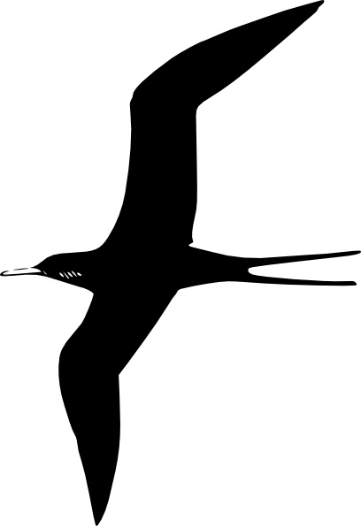Frigate Bird clip art Free vector in Open office drawing svg.