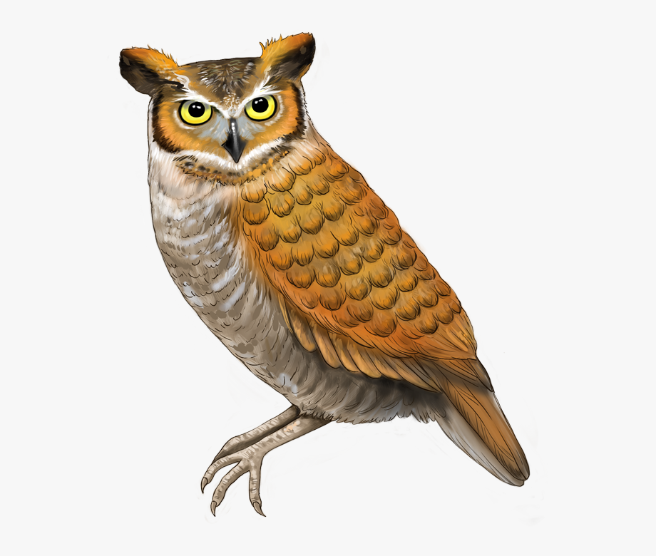 Great Horned Owl , Transparent Cartoon, Free Cliparts.