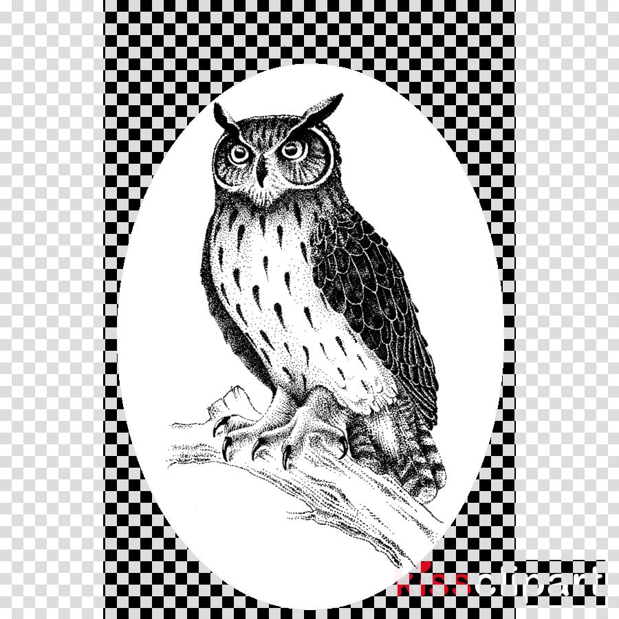 owl bird bird of prey great horned owl drawing clipart.
