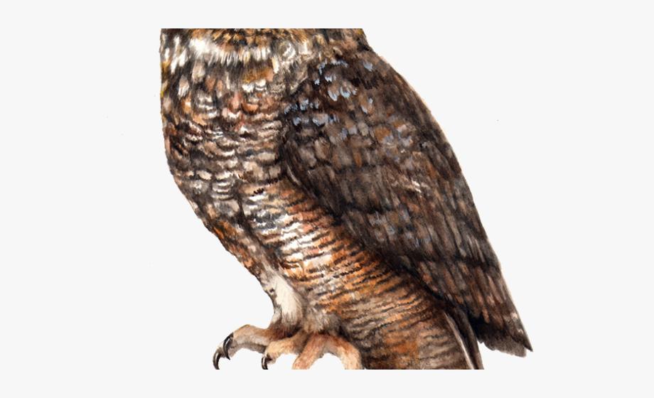 Horned Owl Clipart Transparent.