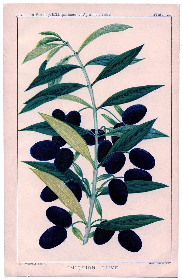 1000+ images about Images: Botanica on Pinterest.