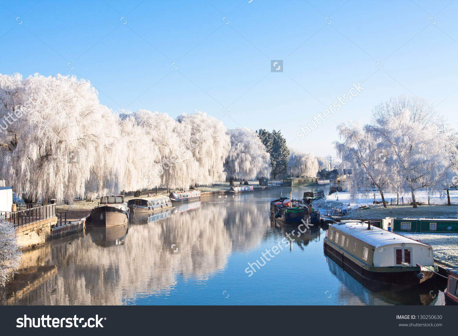 Winter Willow Tree Riverside Great Ouse Stock Photo 130250630.